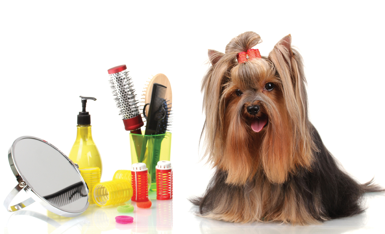 Doggie Avenue First- Class Dog Grooming and Specialty ... |Dogs Grooming
