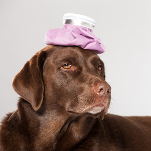 Advanced First Aid for Puppies and Dogs Course