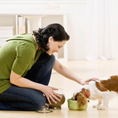 Pet Care Business Course